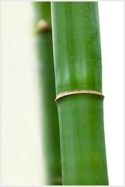 Dicas sobre limpar bambu.